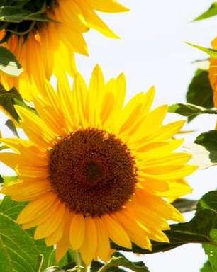 Flores da sorte: saiba qual atrai prosperidade para o seu signo