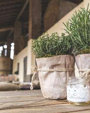 Alecrim: descubra os benefícios desta planta para o corpo e para a mente