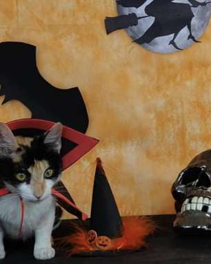 Gatos e cães se fantasiam no Halloween para sensibilizar tutores para adoção
