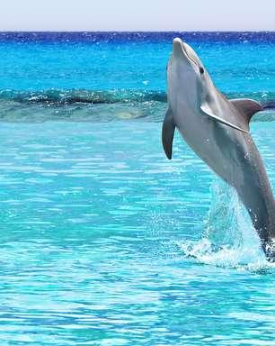 Vida marinha do Caribe surpreende turistas; veja fotos