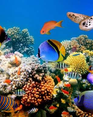 Em Curação, aquário com golfinhos tem água vinda do mar