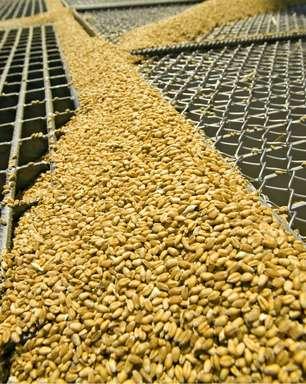 Controle de temperatura reduz perdas na armazenagem de grãos