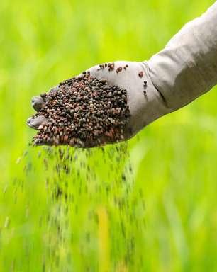 Mercado de fertilizantes ainda depende de importações