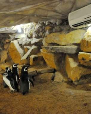 Pinguins podem morrer de frio?