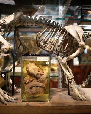 Da imaginação à realidade: conheça 10 animais reais já considerados mitos