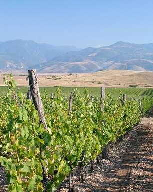 Vinícolas do Chile atraem turistas por suas belas paisagens
