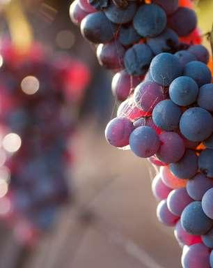 Expectativa de exportação de uvas para 2014 é favorável