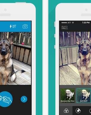 Barkcam: conheça o Instagram para cachorros