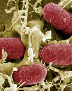 Surto de superbactérias pode matar até 80 mil britânicos