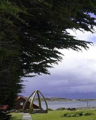 Cruzeiros pelas Ilhas Malvinas premiam amantes da natureza