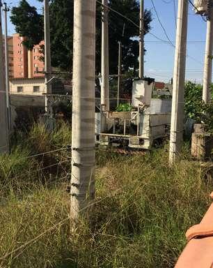 vc repórter: terreno abandonado escondido atrai bichos em SP