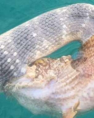 Mergulhador registra batalha de cobra e peixe venenoso