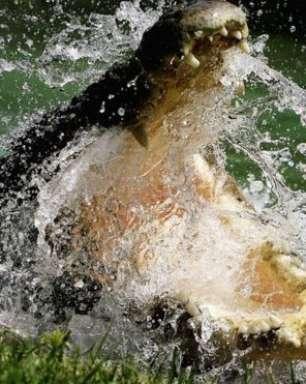 Idoso luta com crocodilos após amigo se afogar