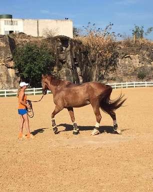 Por saúde dos cavalos, atletas desistem de campeonatos importantes