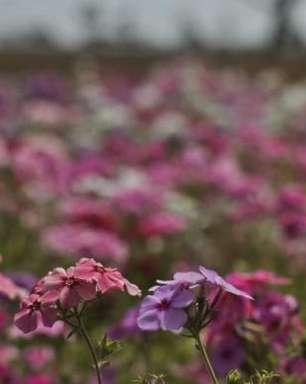 Primavera começa com expectativa de chuvas por todo o País