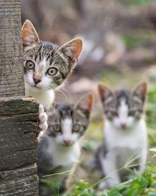 Mulher é condenada por abandonar gatos que se canibalizaram