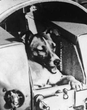 Laika, a 'pioneira' cachorra vira-lata enviada ao espaço há 60 anos em missão 'suicida'