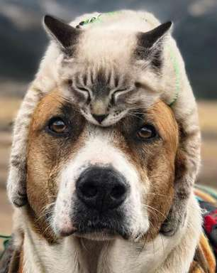 Gato e cachorro viram 'melhores amigos' e fazem viagens juntos por montanhas dos EUA