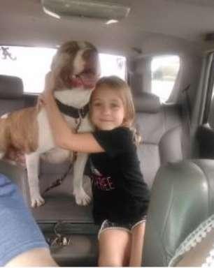 Cachorro desaparecido há um ano é encontrado a 110km de casa