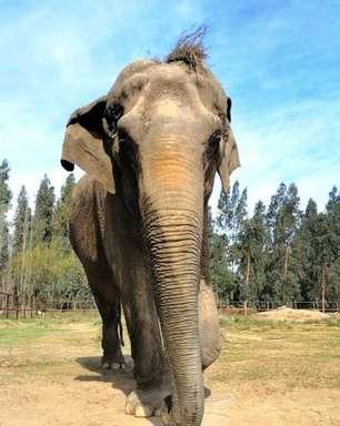Ramba chega ao Brasil e segue para santuário de elefantes