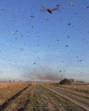 Argentina: 'nuvem de gafanhotos' próxima ao Brasil diminuiu