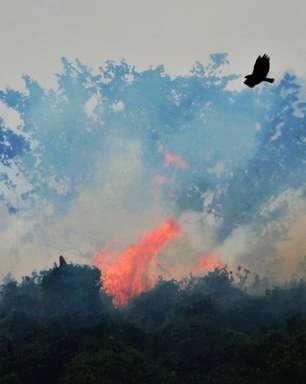 Queimadas no Pantanal crescem mais de 200% e batem recorde