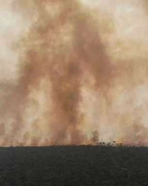 'Escândalo internacional': as reações ao fim do combate ao desmatamento anunciado pelo governo