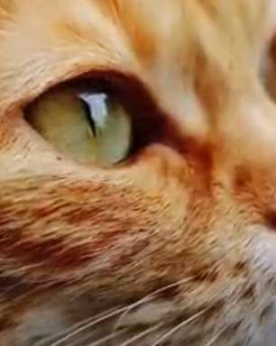 No Dia Mundial do Gato, assista aos vídeos mais populares do YouTube