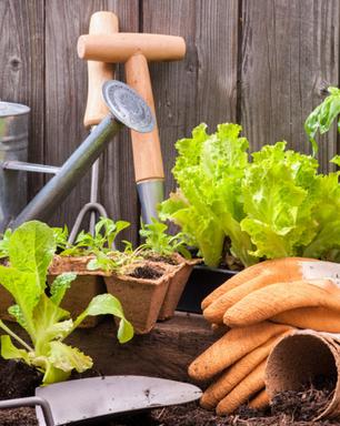 Horta em casa: saiba como cuidar adequadamente de suas hortaliças