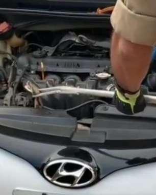 Bombeiros regatam jiboia de 2 metros presa em motor de carro