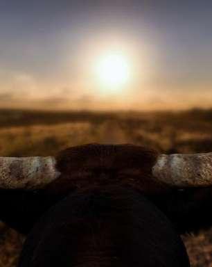 O Sol começa a brilhar em Touro e traz novidades para o seu signo