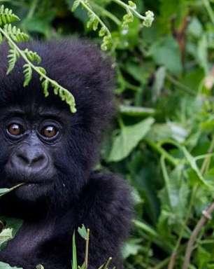 Mais de 200 espécies estão ameaçadas pelos conflitos armados, afirma a UICN