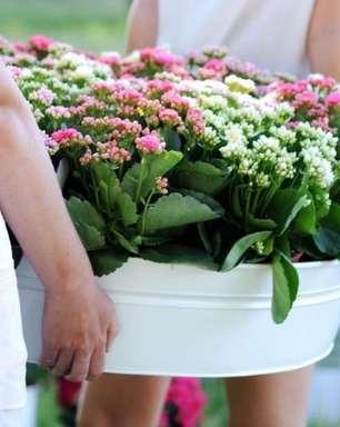 Calandiva: Significado, Como Cuidar e +44 Flores Lindas para Sua Decoração