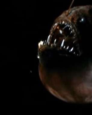 Versão assustadora de peixe de 'Procurando Nemo' é vista em praia da Califórnia