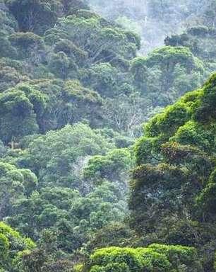 Regeneração: florestas retomaram área igual à da França nos últimos 20 anos