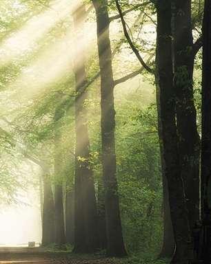 Indústria de árvores plantadas terá quase o dobro de investimento até 2023