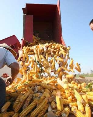 Produção de milho na China deve crescer 4,3% em 2021/22, diz ministério