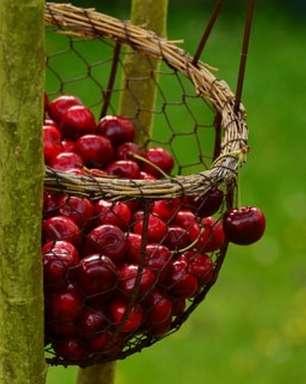 Conheça 5 benefícios das frutas vermelhas