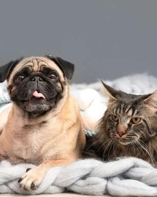 4 dicas valiosas sobre limpeza para quem tem pets em casa