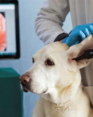 Busca por clínicas veterinárias mais que dobra nos últimos anos