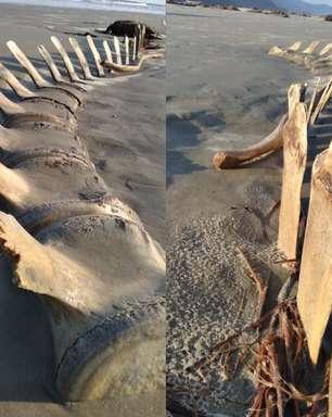 Esqueleto gigante é encontrado no litoral de São Paulo