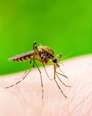 Dengue ou Covid-19? Saiba as diferenças entre as duas doenças