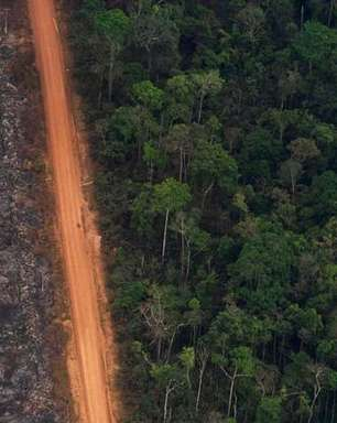 Desmatamento saltou 14% em 2020 em todo o Brasil