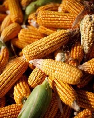 VLI anuncia primeira exportação de milho por terminal em Sergipe