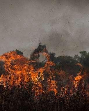 Efeito climático na Amazônia já é realidade, diz professor