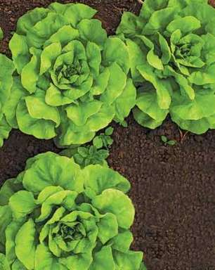 Os desafios da horticultura