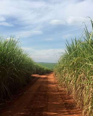 São Martinho aposta no açúcar e lucro cresce 45,4% no 4º trimestre de 2020/21