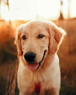 Aplicativo promete auxiliar tutores de pets com diabete