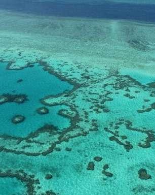 Perspectivas são 'muito ruins' pra Grande Barreira de Corais, dizem cientistas