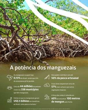 Dia Mundial de Proteção aos Manguezais - 26 de julho